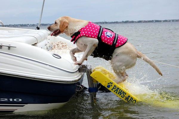 Perro en barco de wakeboard