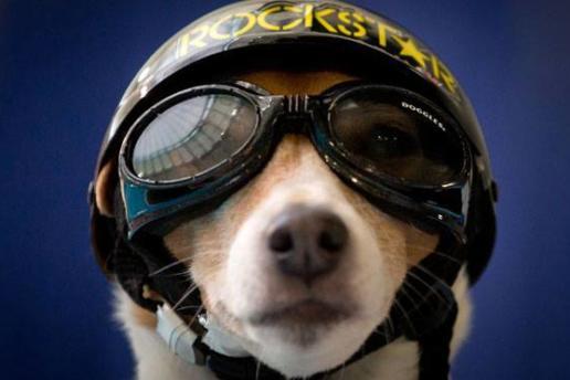 Perros y wakeboard